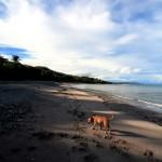 Playa Los Cedros